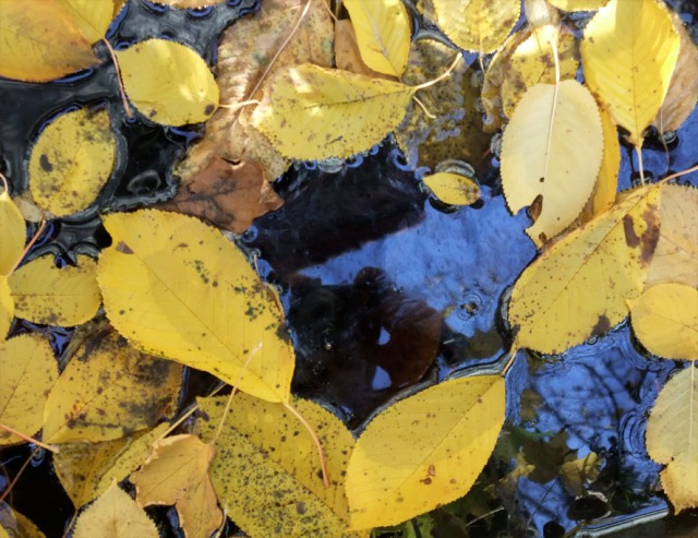 November Sunday Cherry Leaves Stefan Mesch WordPress